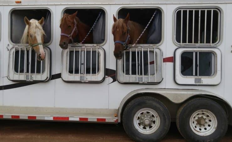 assicurazione autocarro trasporto cavalli